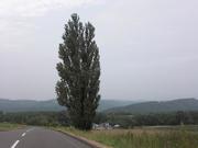 D080707u